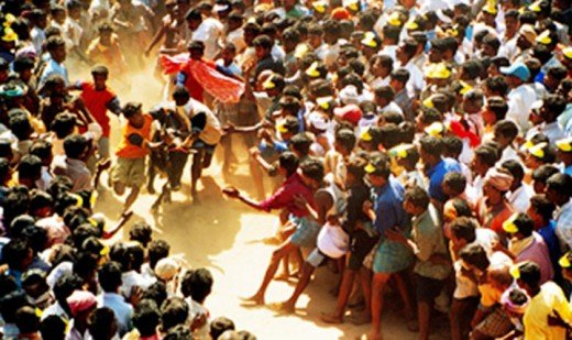Jallikkattu(a form of bull fight), Tamil Nadu, India
