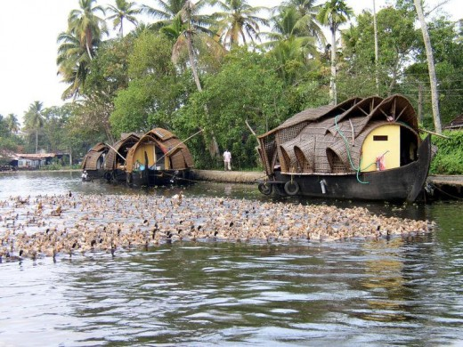 Houseboats in Backwaters of Kerala