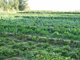 Organic farm/ courtesy of wikipedia
