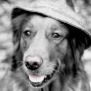 Nikon News Hound profile image