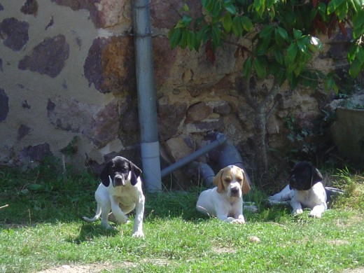 The pups grew up quickly. This photo was taken just before the Ulio's owner took Spot away.