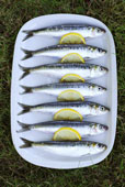 as well as sardines