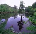 Travel and Life in Aiken and Orangeburg, South Carolina