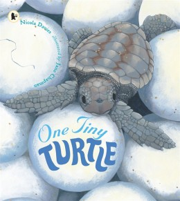 One Tiny Turtle See and Wonder by Jane Chapman