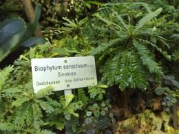 Botanical Garden -2
