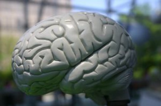 Patterns of appearance and structure are often repeated in nature. This is a model of a human brain.