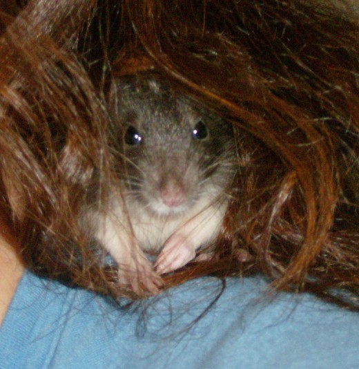 Sandy Nesting in my Stepdaughter's Hair