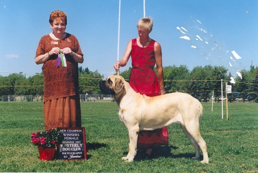My auntie on the day she won her championship. Shows are important in proving yourself worthy of breeding.