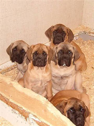 My brothers at seven weeks. Handsome bunch, don't you think?
