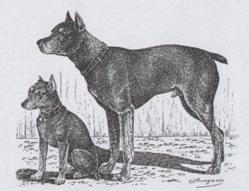 Original Min-Pin from a woodcut featuring the German Pinscher