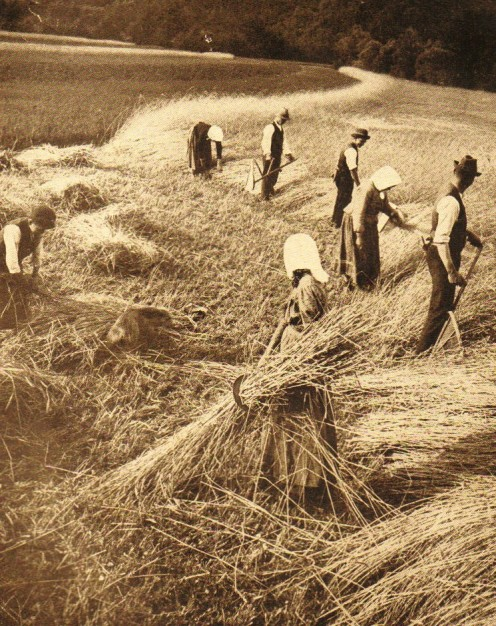 Cutting rye near town of Schwarza, Germany -- 1909 -- Photo: Underwood & Underwood, NY