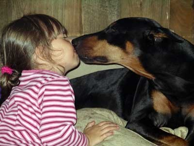 A girl getting kisses from her Doberman Pinscher.
