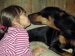 Bad Dog: Understanding Breeds and Attacks