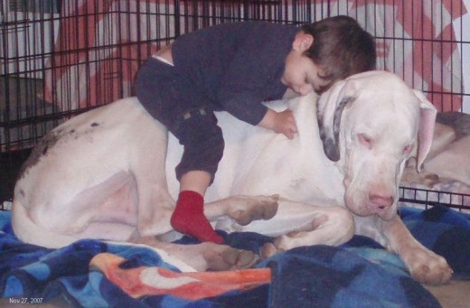 A boy asleep on his Great Dane.