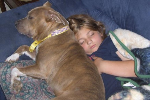 A boy sleeps next to his pit bull type dog.