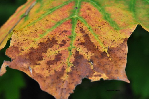 Just a symbolic leaf changing color to mark the change of seasons.