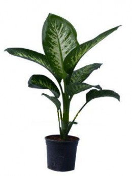 Warning this common house plant can kill - Most popular house plants ...