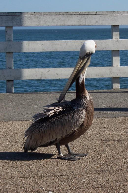 At the Santa Cruz Wharf