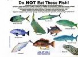Poster put out by i think panama yacht club not all for Poisonous fish to eat