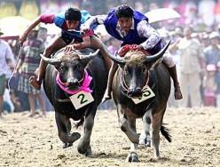 The Chonburi Buffalo Races