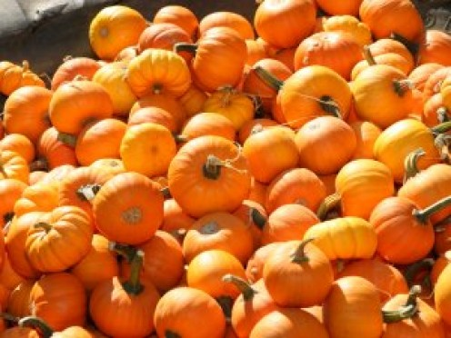 Pumpkins are dissappearing from the fields and appearing at local Fruit and Vegetable Roadside Stands