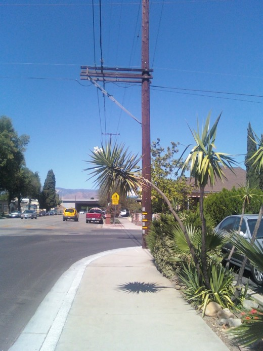 A smaller palm tree spotted on my walk.