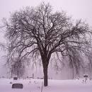 Elm Tree    lizziebelle.blogspot.com