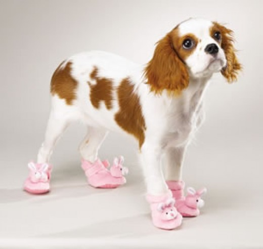 Dog booties will protect your pet's feet in cold weather.