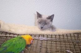 Shall I sleep or eat this bird? *Yawn*