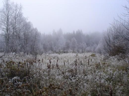 Autum frost