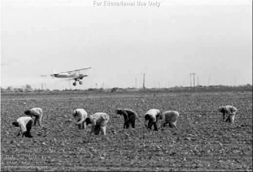 Field workers in California work with the Crop Duster spaying pesticides before the DDT ban.