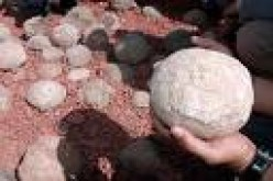 Football-sized dinosaur eggs by nationalgeographicnews.com file photo