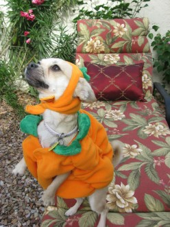 Dressing Up Your Dog For Halloween