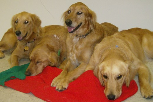 "The golden girls. These four live together and are a real ""pack""."