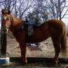 Trailhorsetrainer profile image