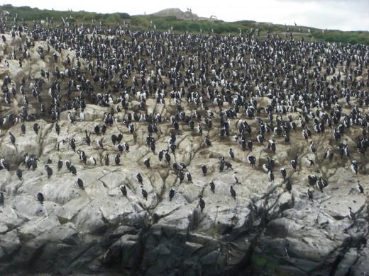 Isla de los Pajaros (Birds Island)