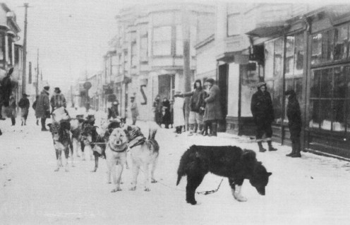 The real Balto at his goal in Nome, Alaska in the early 20th Century, delivering life saving vaccine. His journey became the Iditarod Trail.