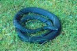 Black coil of a snake