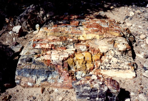 Beautiful colors in the petrified wood