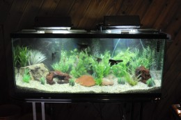 How you can have a healthy aquarium through simple water for How do you clean a fish tank
