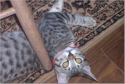 Sweet Romeo kitty