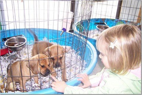 Think about adoption instead of purchasing from a pet store or breeder