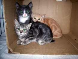 Unwanted kittens await adoption in the local shelter