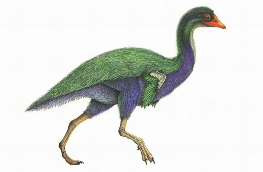 Patagopteryx, a flightless early bird from South America