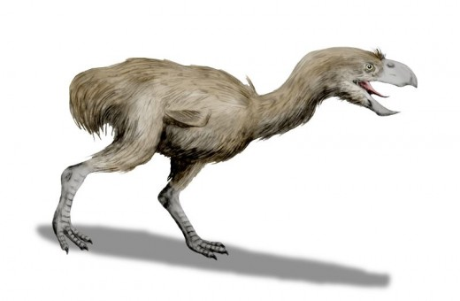 A Cenozoic phorusrhacid, a derived big flightless meat-eating group of modern birds now extinct, maybe related to rails