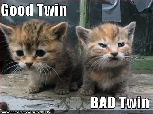 Doesn't need many words, does it.  There are two of these cute little devils living in the barn!!!!