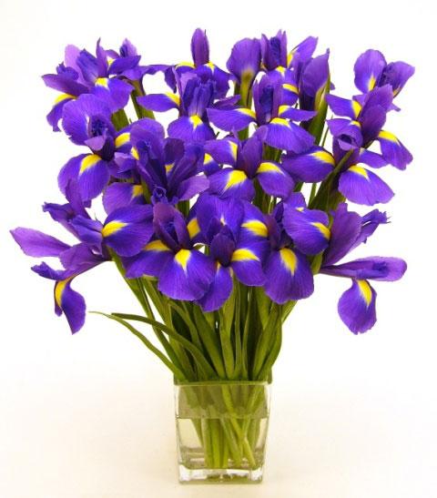 See flowers get de depressed.