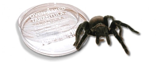 I'll take my Tarantula fried thank you... what you are out?  Okay then I'll take the cheeseburger.