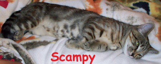 Scampy snuggles on my fleece blanket when s/he's not evicting Pedro from his mammoth dog bed
