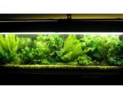 Fake Aquarium Plants